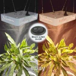 Carambola 6000w Led Grow Light Full Spectrum Red Led 384led Pour Veg Flower Bloom